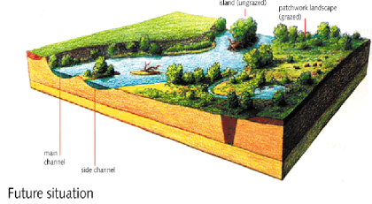 Figure 4: Impression of how the floodplain will develop over time