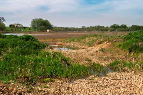 Mainor Farm Wetland