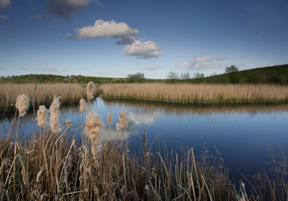 RSPB Middleton Lakes - by Andy Hay (rspb-images.com)