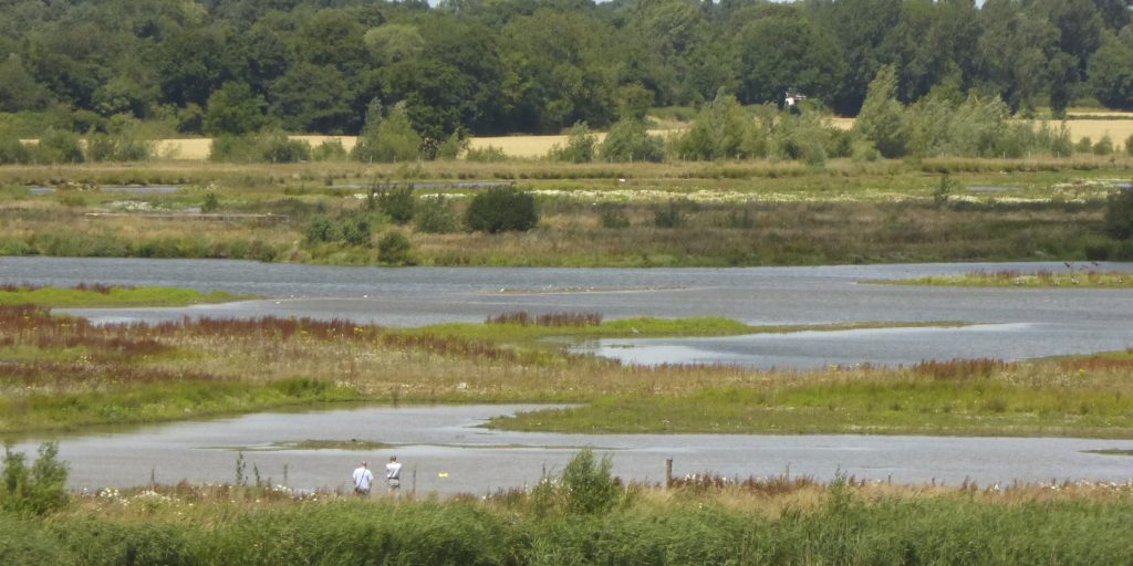Birdwatchers in wetland habitat, Middleton Lakes RSPB Nature Reserve, Warwickshire, July