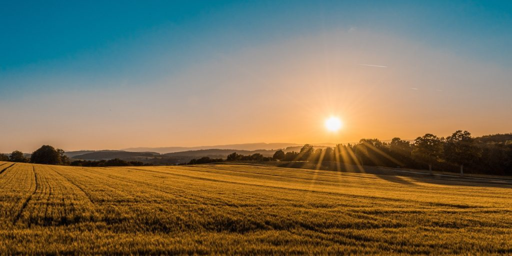 Arable land during sunset